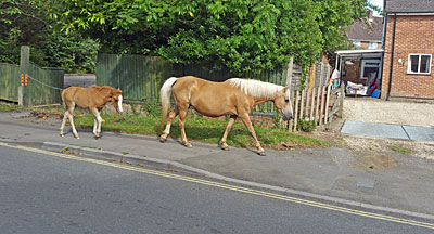 Brockenhurst - where the ponies have right of wayi