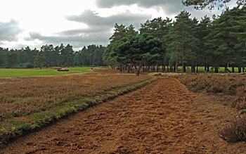 Hankley Common's bridle paths