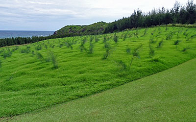 Shanqin Bay 17th fairway tree plantation - green surround in foreground