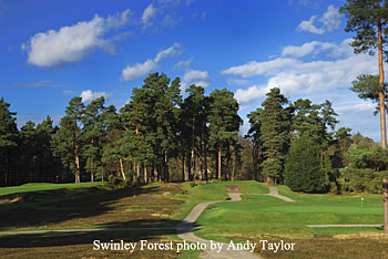 Swinley Forest - photo by Andy Taylor
