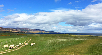 Brora Golf Course - Photo by reviewer