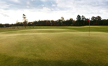 Forest Dunes (The Loop - Black) Golf Course - Photo by reviewer