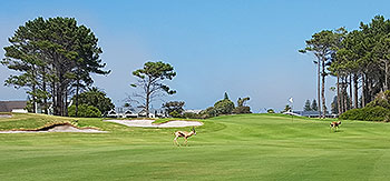 Hermanus (East) Golf Course - Photo by reviewer