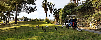 Las Ramblas Golf Course - Photo by reviewer