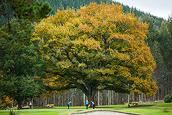 Wairakei Golf Course - Photo by reviewer